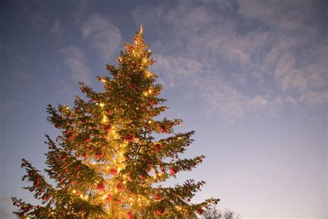 nyc christmas tree recycling begins monday nbc new york
