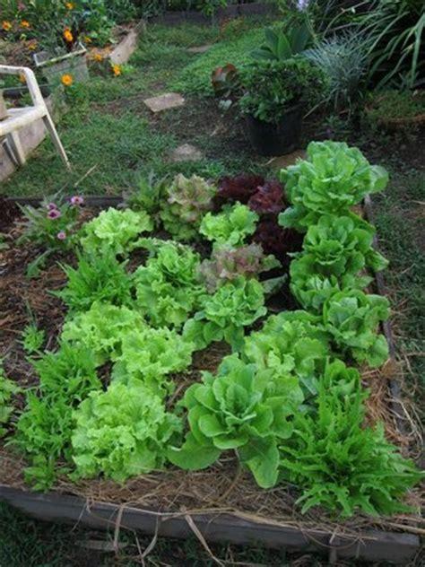 Vegetable Garden Picture Of Hawaii Island Retreat At Ahu Vegetable Gardening In Hawaii