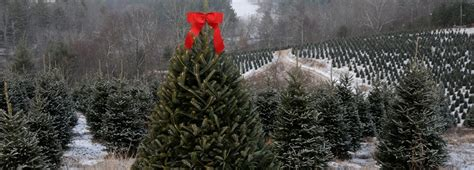 largest christmas tree farms tree farms near me sanjonmotel