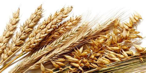 cereali fondamentali  il tuo benessere bestit