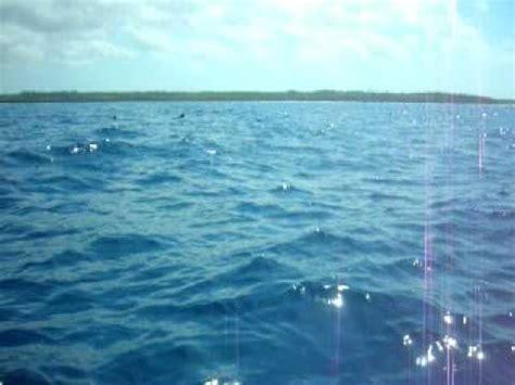 bagno con delfini bagno con i delfini a zanzibar 1