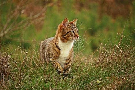alimentazione gatti alimentazione gatto a 5 mesi come deve essere dogalize