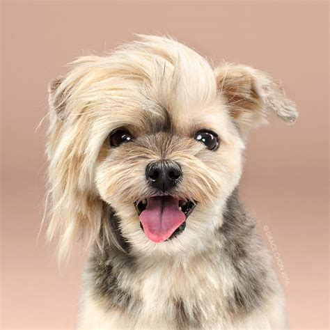 dogs before and after spring haircuts 9 dogs adorable transformation before and after having a