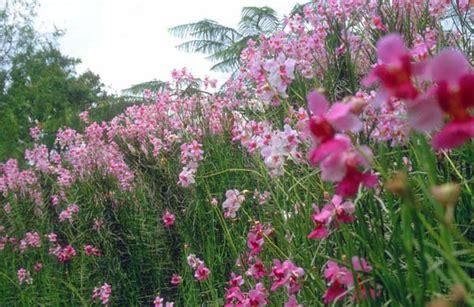 oltre il giardino mymovies i giardini colorati di singapore repubblica it
