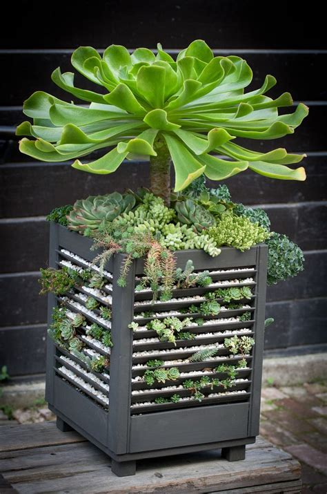180 Best Succulent Window Boxes Containers Images On Succulent Planter Box