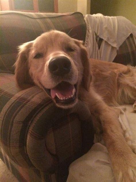 puppies   happy    barnorama