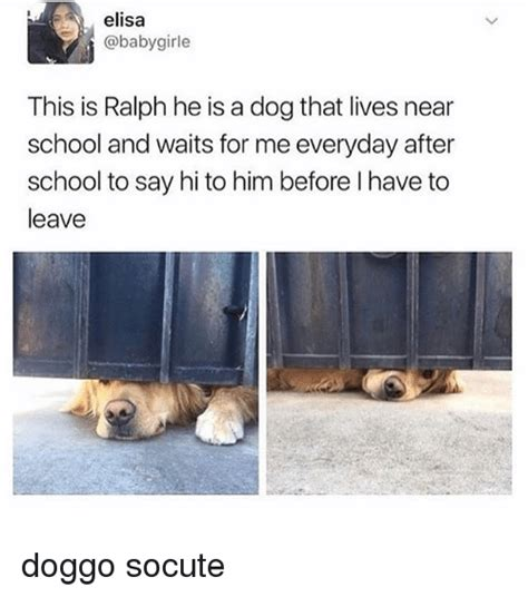 puppy school near me elisa this is ralph he is a that lives near school and waits for me everyday after