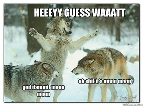 Meme Wolf - image gallery moon moon wolf funny