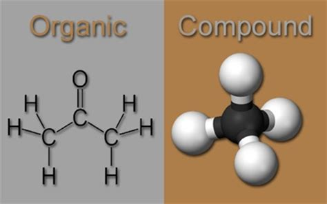 What Is An Organic Compound Organic Compounds Flashcards Easy Notecards