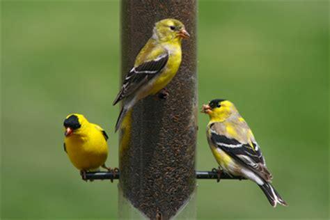 backyard bird shop locations wild bird pet supplies em herr farm home center