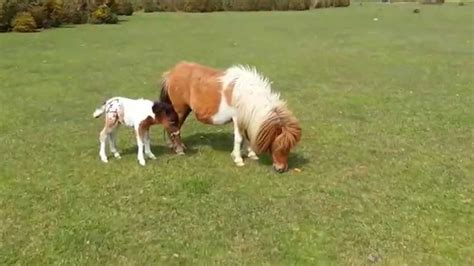 how many pony in a pound cutest my pony no this is a real pony and it s