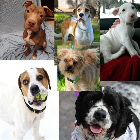 puppies for adoption wi 28 best images about wisconsin puppies for sale on miniature australian