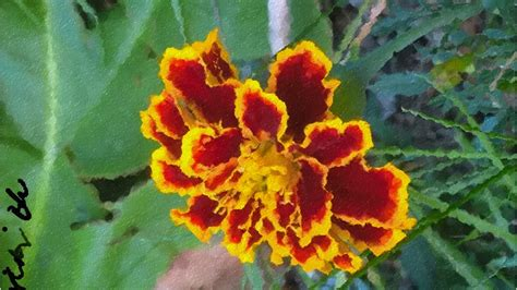 marigold paint marigold painting by ribriblu on deviantart