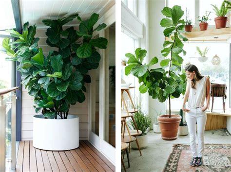 garten mit bambus 1835 violinfigen store stueplanter billede indretning og