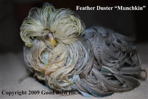 Daster Bird by Budgies Are Awesome Mutation The Feather