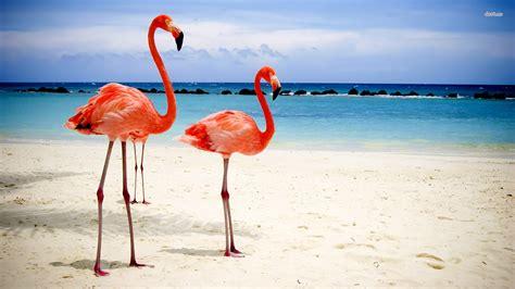 wallpaper flamingo hd flamingo desktop wallpaper wallpapersafari
