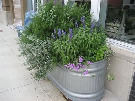 Galvanized Water Trough Planter by Galvanized Water Tank Trough Vegetable Gardens Review Ebooks