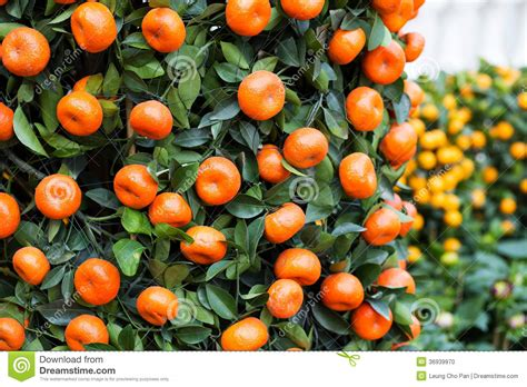 new year tangerine significance new year tangerine meaning 28 images new year