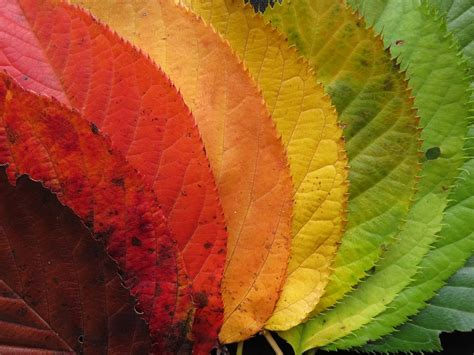 Autum In free photo autumn leaves fall leaves free image on