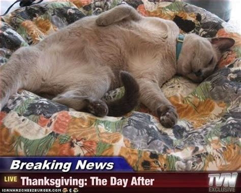 After Thanksgiving Meme - thanksgiving memes popsugar tech