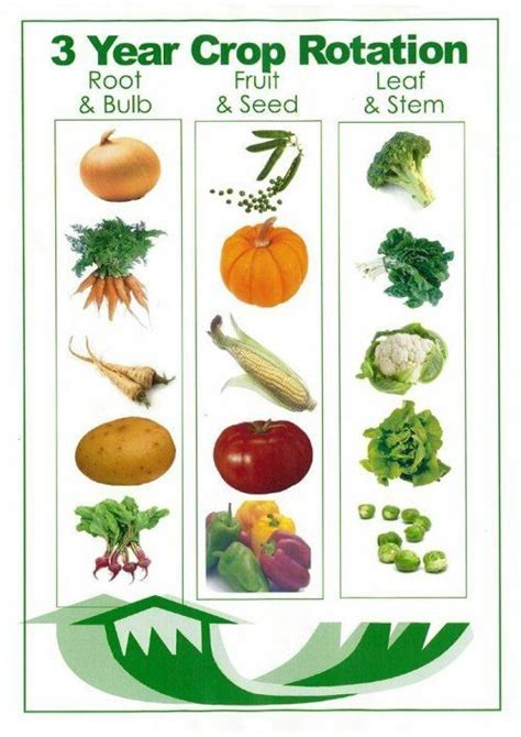 Plant Rotation In Vegetable Garden You Say Potato Gardens Different Types Of And Vegetables