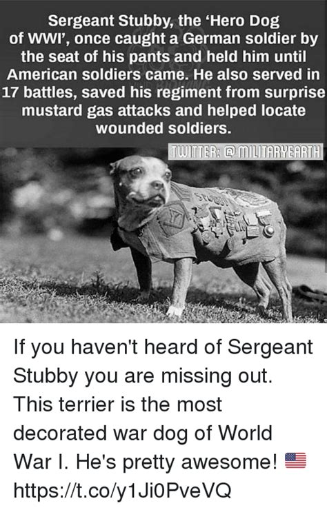 Sgt Stubby Of Wwi 25 Best Memes About Saved Saved Memes
