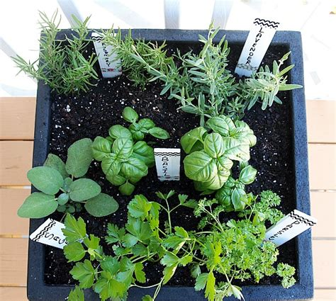 container herb gardening tips for planting a container herb garden