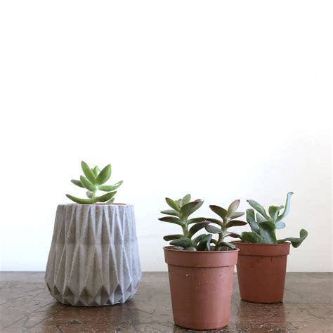 concrete succulent planter concrete mini planter with succulent by b Ꮎ t δ n Ꮖ c t r Ꮖ b e notonthehighstreet