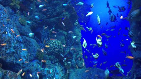 floor to ceiling aquarium with masses of fish