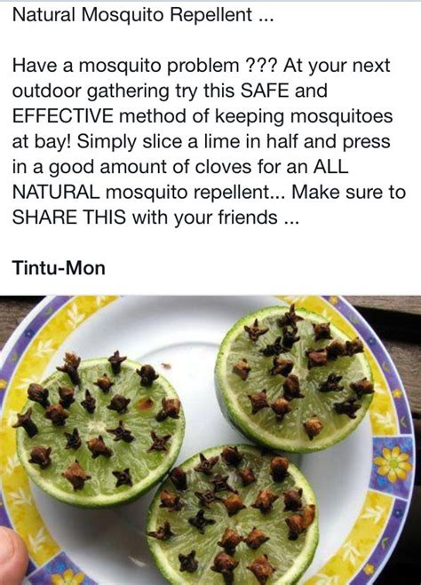 mosquito repellent backyard