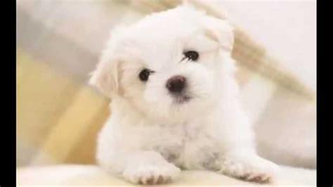 imagenes de perritos perritos adorables youtube