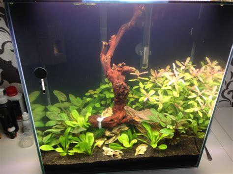 Aquascaping Forum by Fingerwurzel Mit Moos Und Aquariumsilikon Wasserpflanzen Allgemein Aquascaping Forum