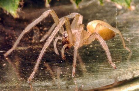 Tas Jansport Black Animal Planet las 10 aranas venenosas peligrosas mundo ara 241 a de