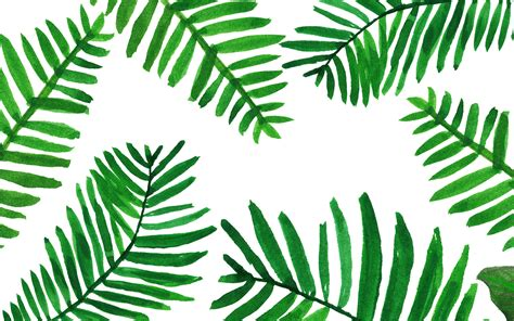 palm tree wallpaper palm leaves wallpaper from www piximitmilch at design
