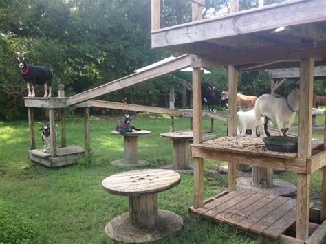 goat playground   fun   goat house goat