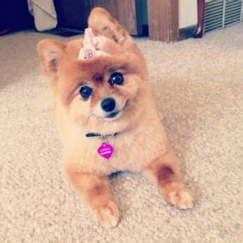 why does my pomeranian bark so much bark r boutique the cat s meow pet services spokane valley wa reviews