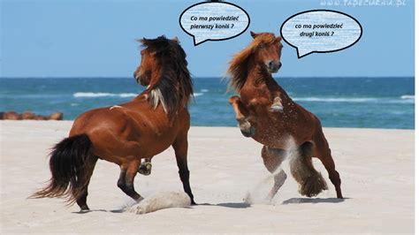 konie konie koniarki pinger pl