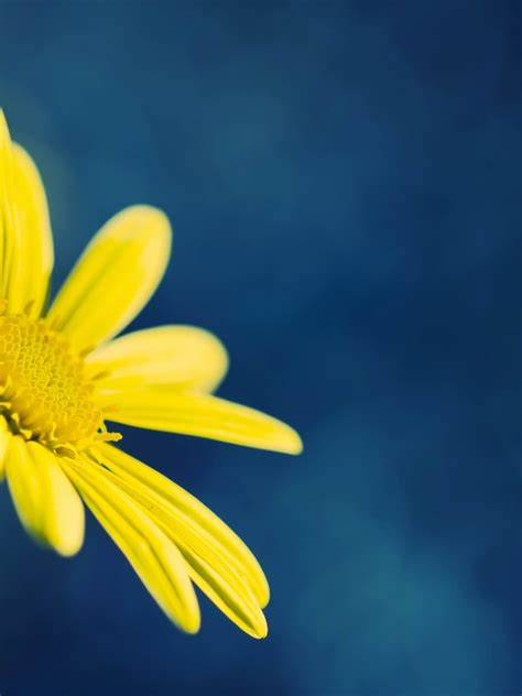 apple wallpaper yellow flower 768x1024 yellow flower on blue background desktop pc and