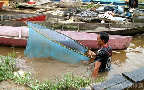 Tempat Jualan Pakan Ternak seri foto menjala di hulu kapuas mongabay co id