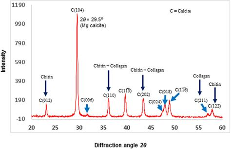 xrd pattern of calcium carbonate x ray diffraction analysis of calcified skeletal powder