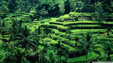 indonesia natures nature indonesia