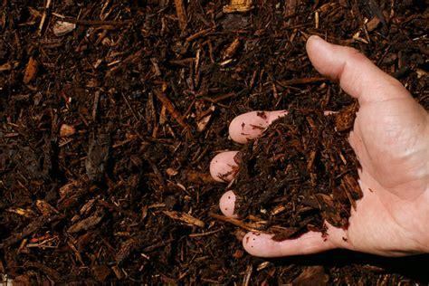 hemlock mulch vs cedar mulch images