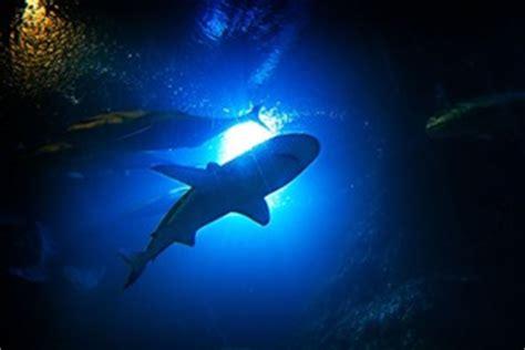 harga tiket underwater world pattaya 2018