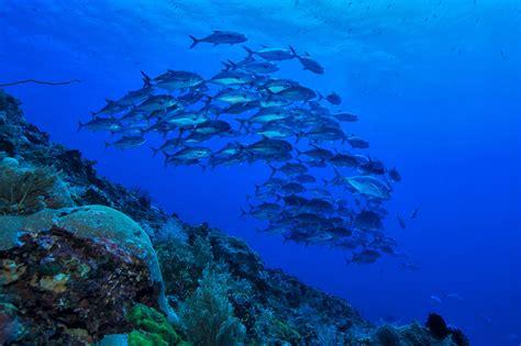 bunaken island dive resort dive and amazing diving in bunaken manado bangka