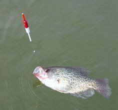 classic rig    crappie fishing   bobber