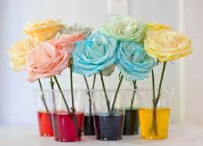 hello wonderful how to dye rainbow flowers