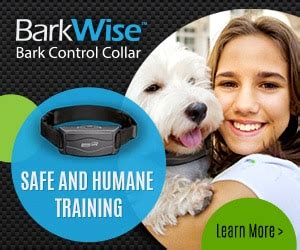 bark collar yorkie get a bark collar for shelties its urgent