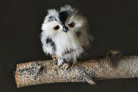 cute baby owl wallpaper wallpapersafari
