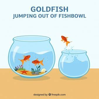 vasca pesce rosso pesce rosso in vasca per i pesci scaricare foto gratis