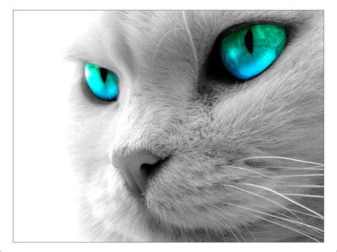 beautiful kittens wallpapers beautiful cats